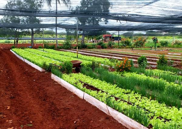 Incrementar la producción de alimentos: una necesidad impostergable