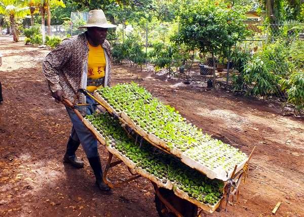 Por un mejor rendimiento agrícola en Cuba. Foto: Abel Rojas