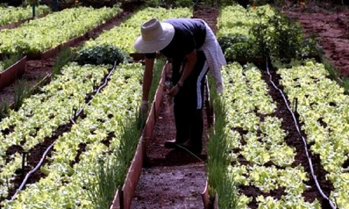Incrementa Cuba áreas bajo manejo sostenible de tierras