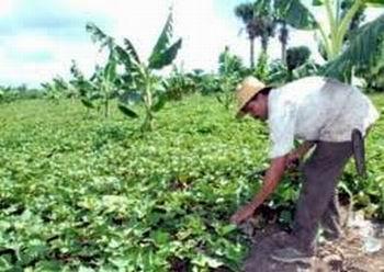Sobresalientes resultados los de la agricultura urbana tunera