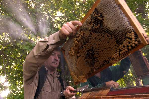 Farmers in Camaguey fulfill honey production