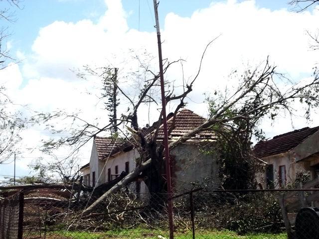 La caida de los árboles sobre los tendidos es la primera causa de la interrupción telefónica.