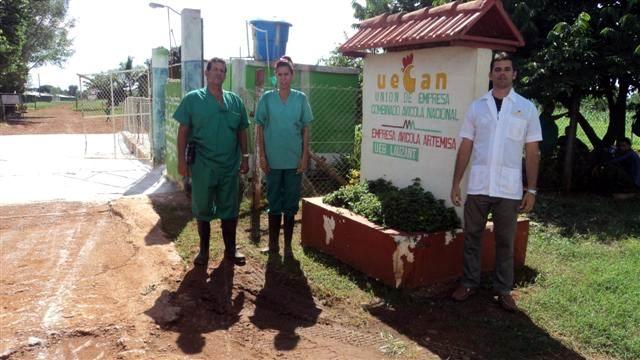 Cuba: producciones de huevos desde la base y con eficiencia (+Audio)