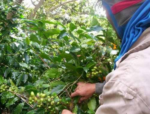 Los agricultores de Cienfuegos cumplen plan de ventas