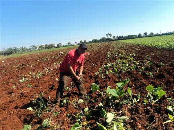Responde Cuba al llamado de las Naciones Unidas en el a�o internacional del suelo