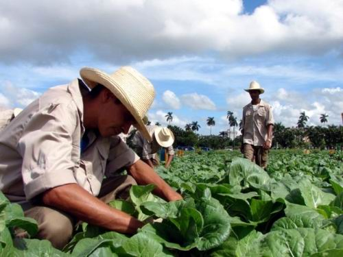 Campesinos de San Luis marcan paso en producción de alimentos