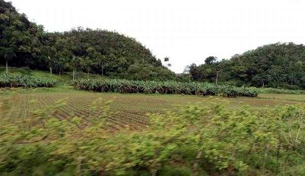 Gana espacio técnica de conservación de suelos.