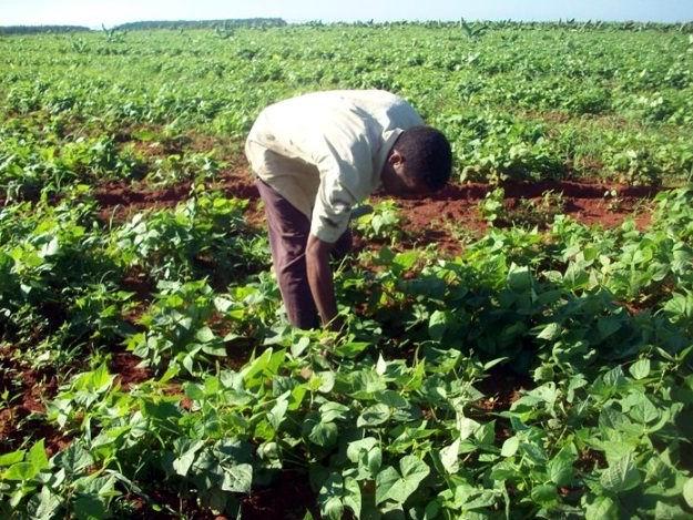 Incrementan organizaciones y producción campesinos de Cienfuegos