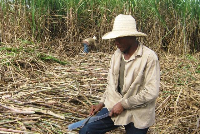 Cuban Sugar Technicians to Attend Latin American Congress in Mexico