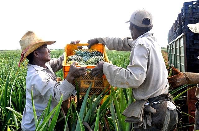 Evalúan producción de frutas para la exportación en Cuba