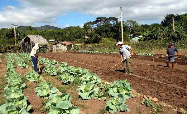 Entran en vigor nuevas modificaciones para la entrega de tierras ociosas en Cuba