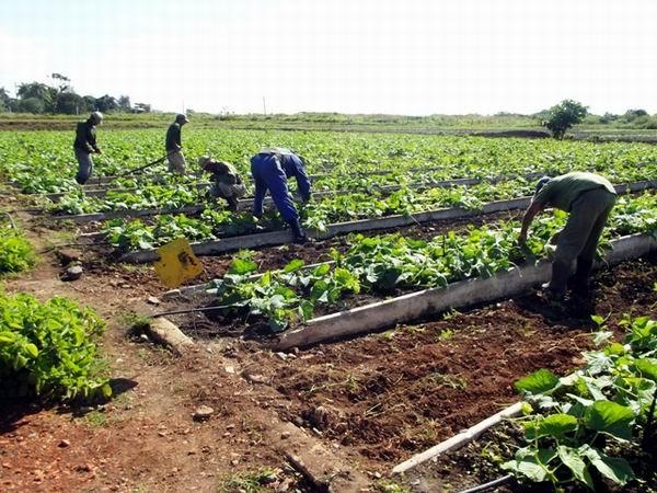 Entidades productivas camagüeyanas reciben condición de Referencia Nacional