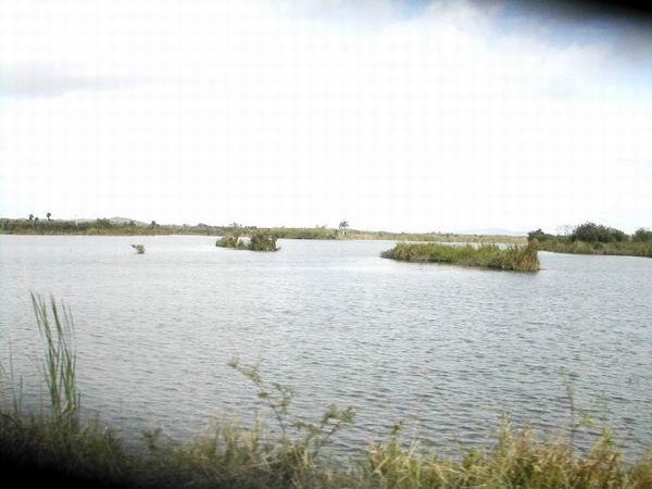 Primavera seca en Camag�ey (+ Fotos)