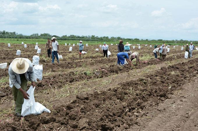 La agricultura cubana tiene que avanzar en el 2019