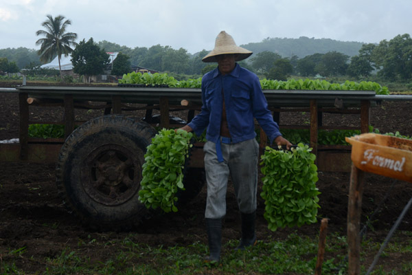 Llama ministro de la Agricultura a fortalecer las bases productivas