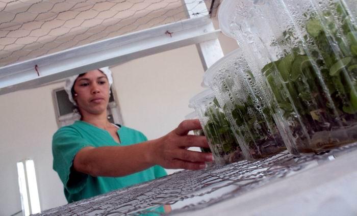 Insertan universitarios avileños a proyectos de agricultura sostenible