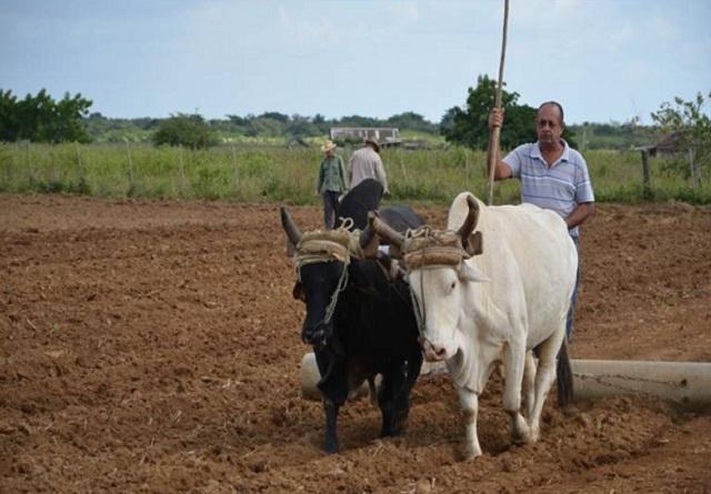 Nuevas normas para reanimar el sector agropecuario (+Audios y Fotos)