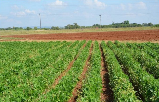 New Rules for the Local Agricultural Sector