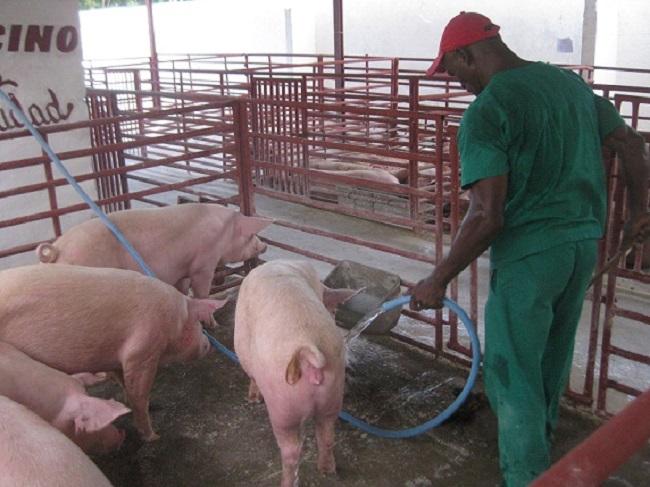 Cumple sistema de la agricultura tunero encargo productivo estatal