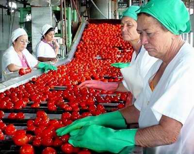 Se alista fábrica conservera de Camalote para la campaña del tomate en Camagüey