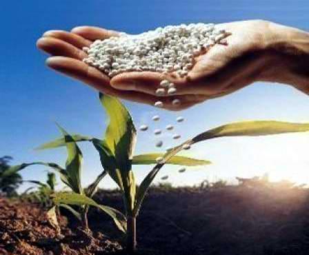 Retomará fábrica Rayonitro, producciones de fertilizantes granulados