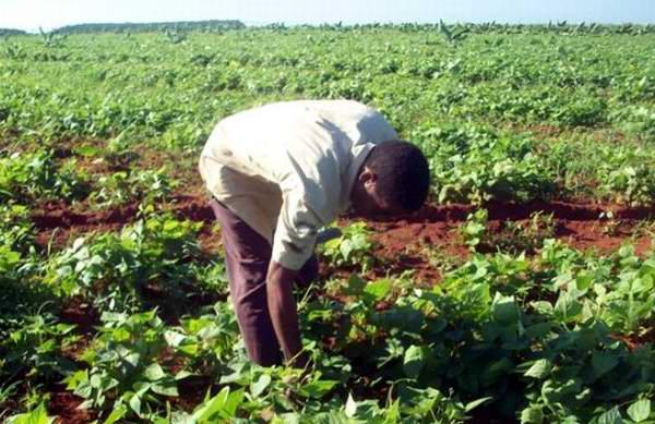 Se consolida aseguramiento logístico en el sistema de la agricultura cubana