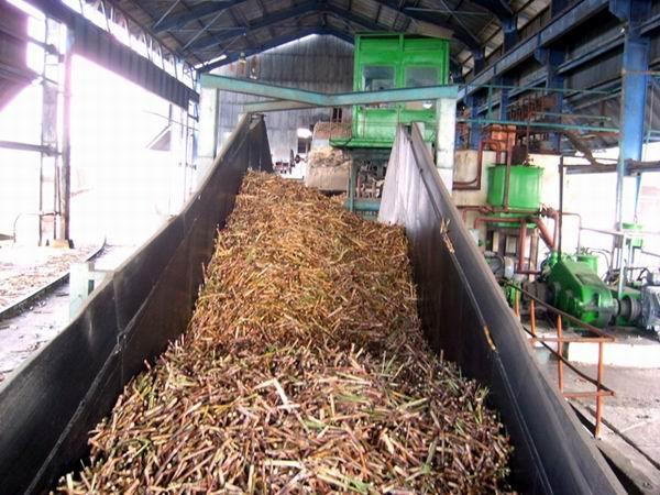 Devolverle a la caña de azúcar su importancia en la economía cubana