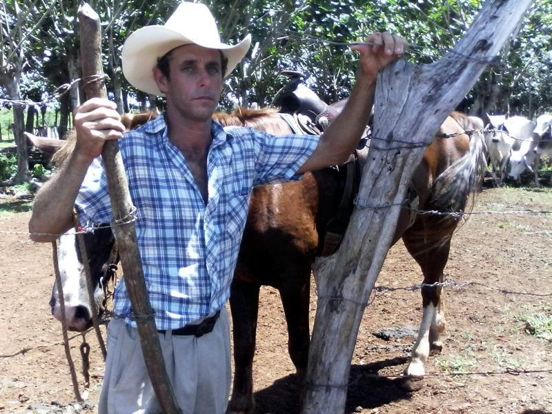 Armando cría más de un centenar de toros. Foto: Elvis Gil
