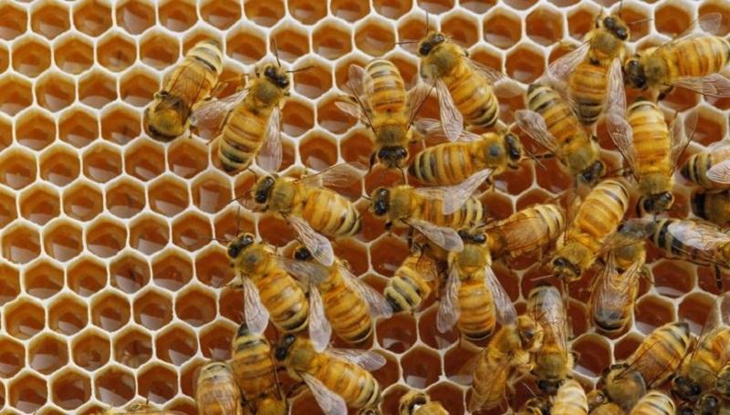 Las abejas también tienen su Día Mundial