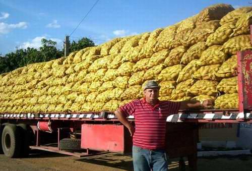 http://www.radiorebelde.cu/images/images/economia/recogida-papa.jpg