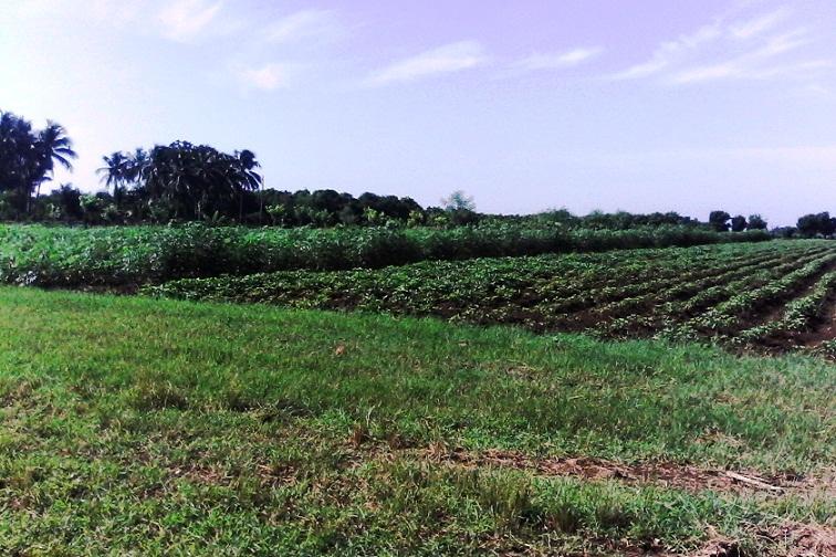 Reconocen a productores cubanos