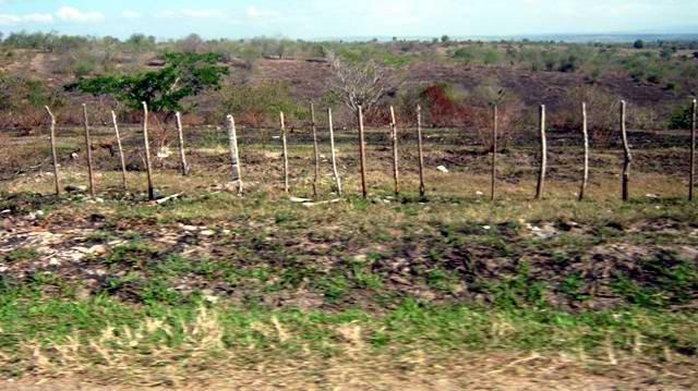 Los potreros destinados a la ganadería muestran el impacto de la fuerte sequía. Foto Carlos Sanabia