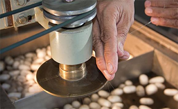 Expertos chinos en Cuba para incrementar la producción de seda