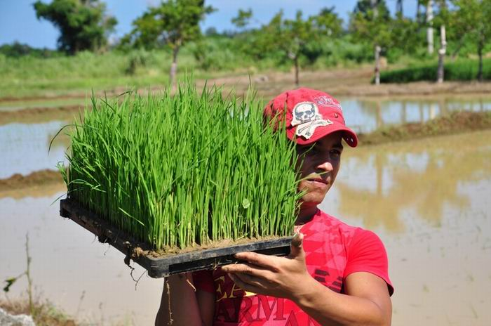 Cuba and Japan Consolidate Project to Develop Rice Growing