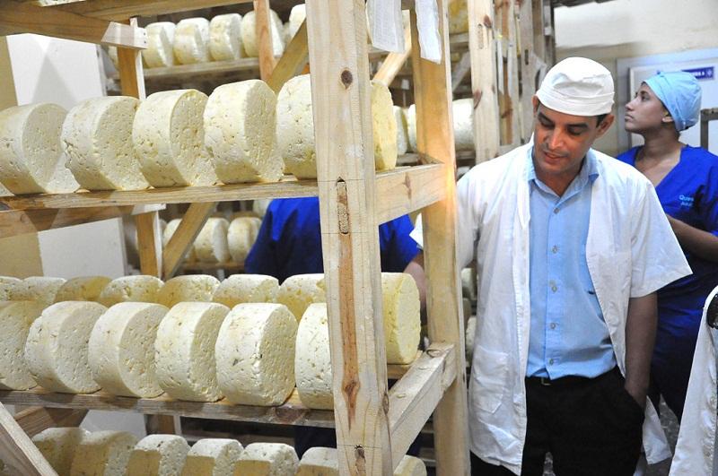 Recuperan industria de quesos en Cuba