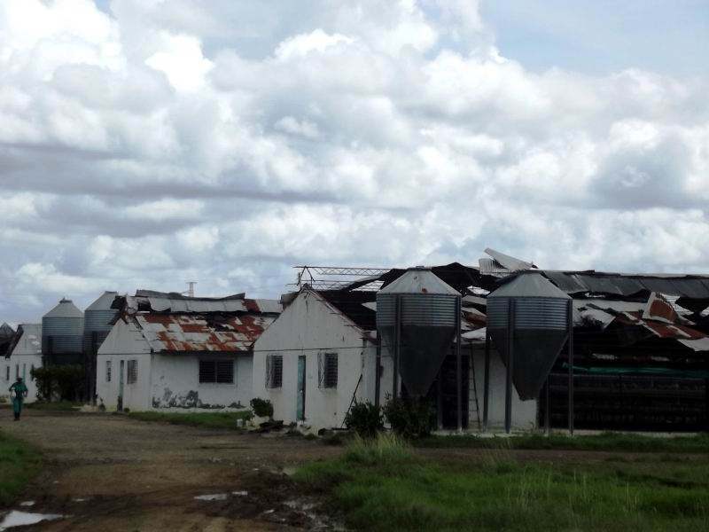 Sólo restan ocho naves avícolas por recuperar de las 93 dañadas por el huracán.
