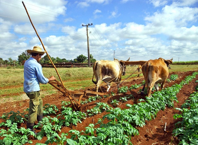 Good Investment Trend of the Cuban Agricultural Sector