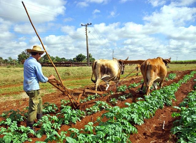 Normas jurídicas sobre la regulación y organización en actividades agropecuarias (+Audio)