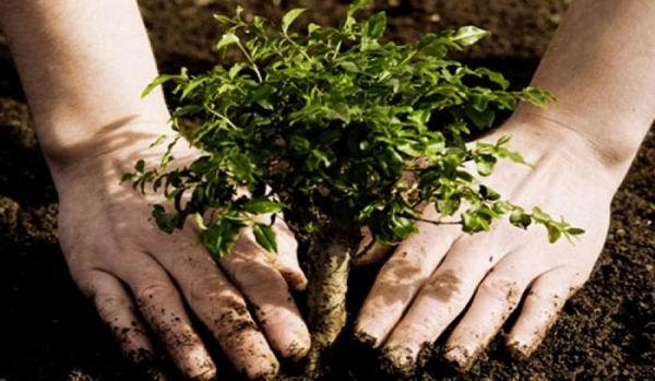Latin America Favors Reforestation in Bonn Challenge in Havana