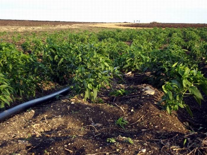 Validan en Cuba tecnología para ahorro del agua en sistemas de riego