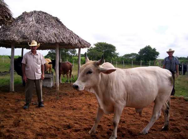 Tierras para quienes produzcan alimentos