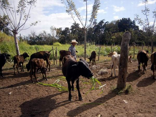 Eval�a Machado Ventura trabajo de unidades productivas de la agricultura