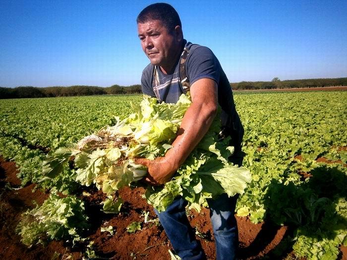 Dinamiza Sector Agrícola de Cienfuegos implementación de 63 medidas (+Audio)
