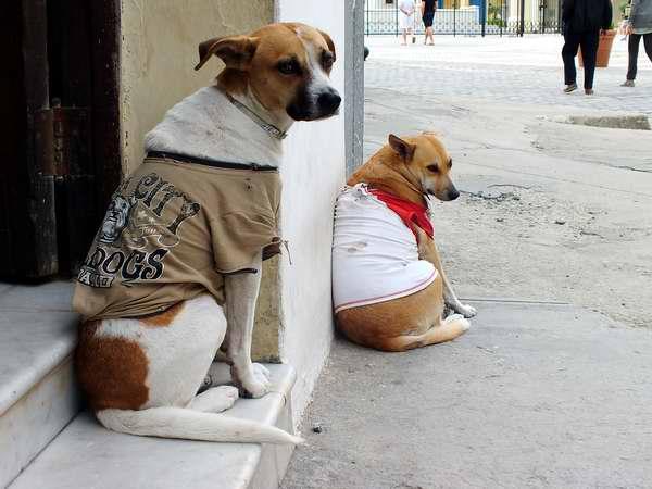 ¿Invierno en Cuba? Foto Abel Rojas