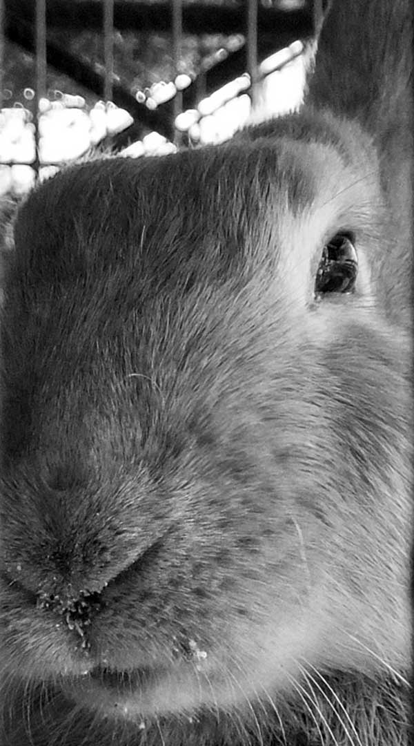 Al igual que los seres humanos, cada conejo tiene una personalidad distinta. Algunos disfrutan de su independencia más que otros. Foto: Abel Rojas Barallobre