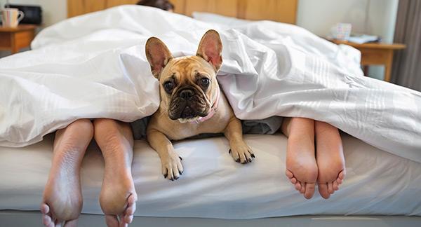 Dormir con mascotas mejora la calidad del sue�o