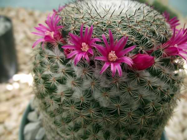 Entre cactus y suculentas for Cactus y suculentas