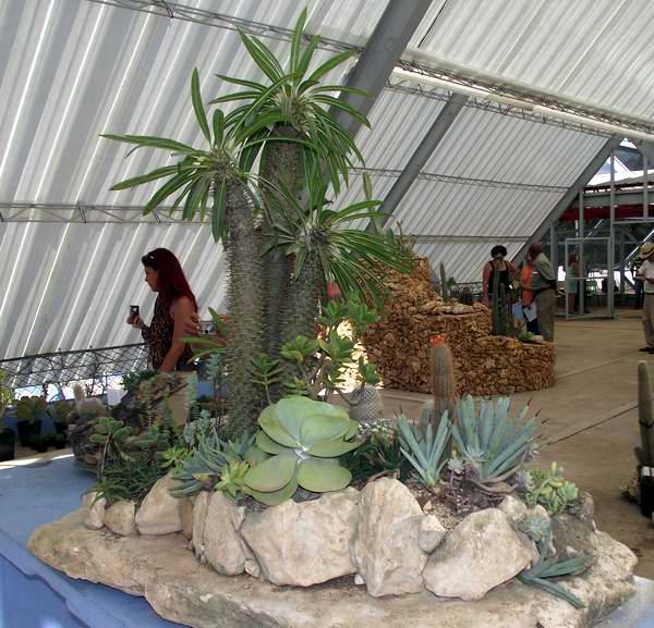 Entre Cactus Y Suculentas
