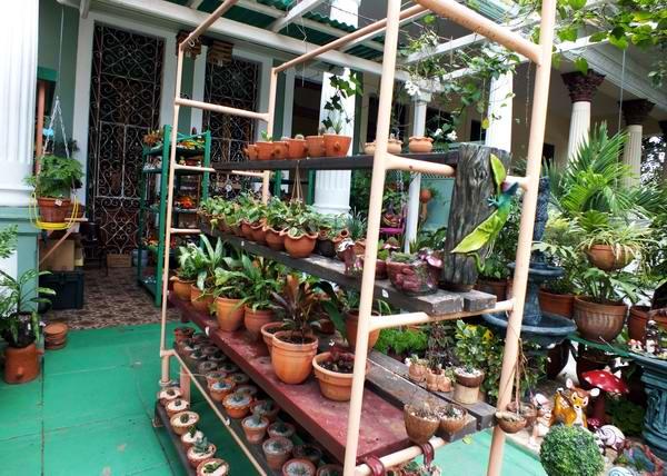 La venta de plantas es otra de las opciones que nos brindan los cuentapropistas. Foto Abel Rojas Barallobre