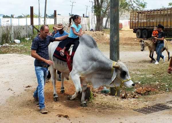 Los m�s peque�os se deleitaron en la Feria Internacional Agropecuaria. Foto Abel Rojas